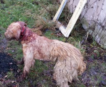 Psa uśpiono aby skrócić mu cierpienie.